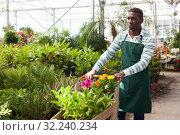 Купить «Flower seller carrying trolley with plants», фото № 32240234, снято 22 мая 2019 г. (c) Яков Филимонов / Фотобанк Лори