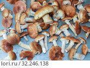 Fungus mushrooms spread out on the table. Стоковое фото, фотограф Акиньшин Владимир / Фотобанк Лори