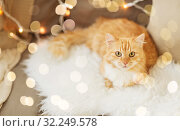 Купить «red tabby cat on sofa with sheepskin at home», фото № 32249578, снято 15 ноября 2017 г. (c) Syda Productions / Фотобанк Лори
