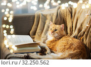 Купить «red cat lying on sofa with book and cones at home», фото № 32250562, снято 15 ноября 2017 г. (c) Syda Productions / Фотобанк Лори