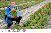 Owner of greenhouse business examining quality of growing pelargonium in pots. Стоковое видео, видеограф Яков Филимонов / Фотобанк Лори