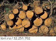Woodpile of thick wood lying on the ground. Стоковое фото, фотограф Сергей Трофименко / Фотобанк Лори