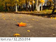 Купить «Кленовые листья на асфальте», фото № 32253014, снято 3 октября 2019 г. (c) Кристина Викулова / Фотобанк Лори