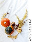 chestnuts and pumpkins on white background. Стоковое фото, фотограф Дарья Филимонова / Фотобанк Лори