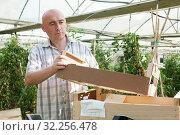 Купить «Man professional gardener working with crates for vegetable», фото № 32256478, снято 16 декабря 2019 г. (c) Яков Филимонов / Фотобанк Лори