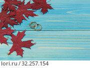 Купить «Два обручальных кольца лежат рядом с красными кленовыми листьями на синем деревянном столе. Осенняя свадьба. Открытка», фото № 32257154, снято 21 сентября 2019 г. (c) Наталья Гармашева / Фотобанк Лори