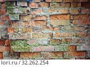 The texture of the brickwork with a growth of moss. Стоковое фото, фотограф Федонников Никита Александрович / Фотобанк Лори