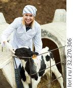 Купить «Female employee posing with young cattle», фото № 32270306, снято 17 октября 2019 г. (c) Яков Филимонов / Фотобанк Лори
