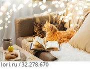 Купить «two cats lying on sofa at home», фото № 32278670, снято 15 ноября 2017 г. (c) Syda Productions / Фотобанк Лори