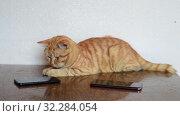 Купить «A beautiful ginger cat lies on table next to two cell phones», видеоролик № 32284054, снято 4 октября 2019 г. (c) Володина Ольга / Фотобанк Лори
