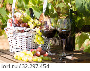 red wine ripe grapes and picnic basket on table in vineyard. Стоковое фото, фотограф Татьяна Яцевич / Фотобанк Лори