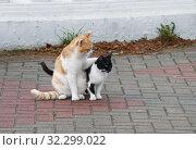Купить «Уличные кошки. Рыжий кот обнимает чёрную кошку», эксклюзивное фото № 32299022, снято 6 октября 2019 г. (c) Dmitry29 / Фотобанк Лори