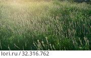 Купить «The Beautiful wild heather closeup a shot. Sunset», видеоролик № 32316762, снято 24 августа 2019 г. (c) Володина Ольга / Фотобанк Лори