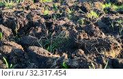 Купить «Fragment of plowed land with weed», видеоролик № 32317454, снято 24 августа 2019 г. (c) Володина Ольга / Фотобанк Лори