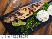 Купить «Grilled trout with rice», фото № 32318270, снято 12 декабря 2019 г. (c) Яков Филимонов / Фотобанк Лори