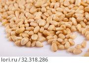 Купить «Pile of delicious pine nuts on a white surface», фото № 32318286, снято 13 ноября 2019 г. (c) Яков Филимонов / Фотобанк Лори