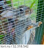 Купить «Кролик в клетке», фото № 32318542, снято 21 июля 2019 г. (c) E. O. / Фотобанк Лори