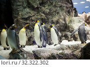 Купить «Natural living conditions with real snow, iceberg and cold sea water for king penguins in the Penguin Planet penguinarium in the Loro Parque, Tenerife, Canary island, Spain», фото № 32322302, снято 4 января 2016 г. (c) Кекяляйнен Андрей / Фотобанк Лори