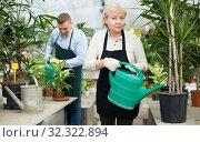 Купить «Woman gardener is watered flowers near plants», фото № 32322894, снято 23 февраля 2018 г. (c) Яков Филимонов / Фотобанк Лори