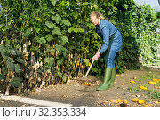 Купить «Woman gardener with rake working near green seedlings in greenhouse», фото № 32353334, снято 3 октября 2018 г. (c) Яков Филимонов / Фотобанк Лори