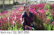 Купить «Portrait of florist woman working in sunny greenhouse full of blooming plants», видеоролик № 32367050, снято 3 июня 2019 г. (c) Яков Филимонов / Фотобанк Лори