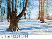 Купить «Зимний пейзаж. Зимний лес. Winter sunrise landscape - forest trees and white snowdrifts on the foreground. Colorful winter forest», фото № 32391494, снято 22 февраля 2019 г. (c) Зезелина Марина / Фотобанк Лори