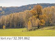 Купить «Осенний лес. Дуб на переднем плане. Autumn forest. The oak tree in back light.», фото № 32391862, снято 4 октября 2019 г. (c) Евгений Романов / Фотобанк Лори