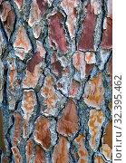 Купить «Tree bark texture», фото № 32395462, снято 11 мая 2015 г. (c) Арестов Андрей Павлович / Фотобанк Лори