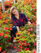 Woman farmer checking blooming begonias. Стоковое фото, фотограф Яков Филимонов / Фотобанк Лори