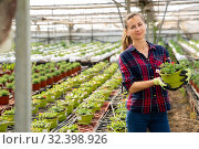 Positive farmer engaged in cultivation portulaca. Стоковое фото, фотограф Яков Филимонов / Фотобанк Лори