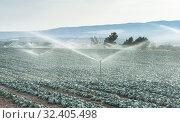Купить «Watering cabbage with sprinklers. Blue sky.», фото № 32405498, снято 4 сентября 2016 г. (c) easy Fotostock / Фотобанк Лори