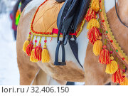 Купить «Russia, Samara, March 2019: Shrovetide. Walking horse in a beautiful harness.», фото № 32406150, снято 10 марта 2019 г. (c) Акиньшин Владимир / Фотобанк Лори