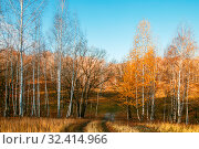 Купить «Beautiful bright sunny colorful autumn landscape with a road. Morning among trees with foliage in nature outdoors in an orange-yellow golden forest in fine warm weather in October in the fall season», фото № 32414966, снято 19 октября 2019 г. (c) Светлана Евграфова / Фотобанк Лори