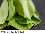 Купить «close up of bok choy cabbage on slate background», фото № 32420626, снято 12 апреля 2018 г. (c) Syda Productions / Фотобанк Лори