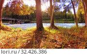 Купить «Meadow at mountain river bank. Landscape with green grass, pine trees and sun rays. Movement on motorised slider dolly.», видеоролик № 32426386, снято 20 февраля 2019 г. (c) Александр Маркин / Фотобанк Лори