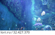 Large marine fish(in the aquarium, close-up), underwater life (2019 год). Редакционное видео, видеограф Владимир Журавлев / Фотобанк Лори