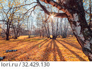Купить «Beautiful bright sunny colorful autumn landscape. Morning among trees with foliage in nature outdoors in an orange-yellow golden forest in fine warm weather in October in the fall season.Russia, Saratov region», фото № 32429130, снято 19 октября 2019 г. (c) Светлана Евграфова / Фотобанк Лори