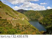 Купить «Vineyards, Ribeira Sacra, Heroic Viticulture, Sil river canyon, Sober, Lugo, Galicia, Spain», фото № 32430678, снято 23 мая 2019 г. (c) age Fotostock / Фотобанк Лори