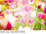 Blume des Lebens als Esoterik Symbol mit Blumenfeld im Hintergrund. Стоковое фото, фотограф Zoonar.com/Robert Kneschke / age Fotostock / Фотобанк Лори