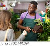 Купить «Florist helping female to choose potted plant», фото № 32440394, снято 14 февраля 2019 г. (c) Яков Филимонов / Фотобанк Лори