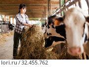 Farm worker feeding cows with hay. Стоковое фото, фотограф Яков Филимонов / Фотобанк Лори