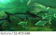 Купить «В океанариуме зоопарка города Чианг Май. Таиланд», видеоролик № 32473646, снято 20 декабря 2018 г. (c) Виктор Карасев / Фотобанк Лори