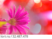 Купить «Close-up shot of the beautiful flowers. Suitable for floral background.», фото № 32487478, снято 21 января 2020 г. (c) easy Fotostock / Фотобанк Лори