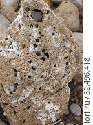 Купить «Perforated limestone rock by activity of common piddock (Pholas dactylus). This photo was taken in Portitxol, Alicante province, Comunidad Valenciana, Spain.», фото № 32496418, снято 12 февраля 2016 г. (c) age Fotostock / Фотобанк Лори