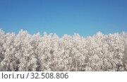 Купить «Aerial video view from moving up drone of birch forest under hoarfrost in winter season.», видеоролик № 32508806, снято 7 ноября 2019 г. (c) Serg Zastavkin / Фотобанк Лори