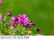 Купить «Close-up shot of the beautiful flowers. Suitable for floral background.», фото № 32523594, снято 21 января 2020 г. (c) easy Fotostock / Фотобанк Лори