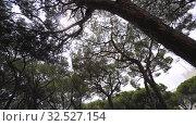 Купить «Green park in Eze, France, summer Europe», видеоролик № 32527154, снято 28 августа 2019 г. (c) Aleksejs Bergmanis / Фотобанк Лори