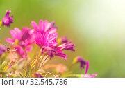 Купить «Close-up shot of the beautiful flowers. Suitable for floral background.», фото № 32545786, снято 21 января 2020 г. (c) easy Fotostock / Фотобанк Лори