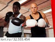 Купить «Two muscular boxers in the ring», фото № 32555454, снято 28 января 2019 г. (c) Яков Филимонов / Фотобанк Лори