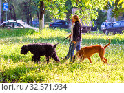 Russia, Samara, June 2017: two women with dogs and walking in the city park on a summer sunny day. Редакционное фото, фотограф Акиньшин Владимир / Фотобанк Лори